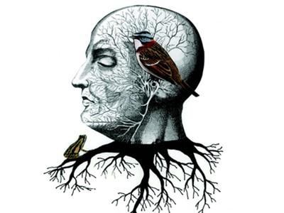 郭昕 推荐《互联网:解开大脑之谜》