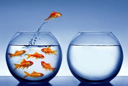 央行调研互联网金融 P2P风险管理是焦点