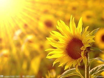 人最大的魅力——阳光般的心态