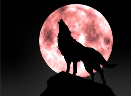 创业经商做狼的十大处世哲学