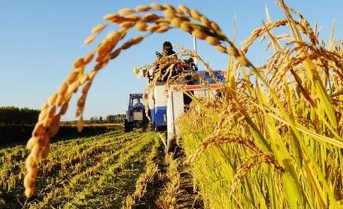 产业探索之农业:互联网正在重塑产业链不同环节