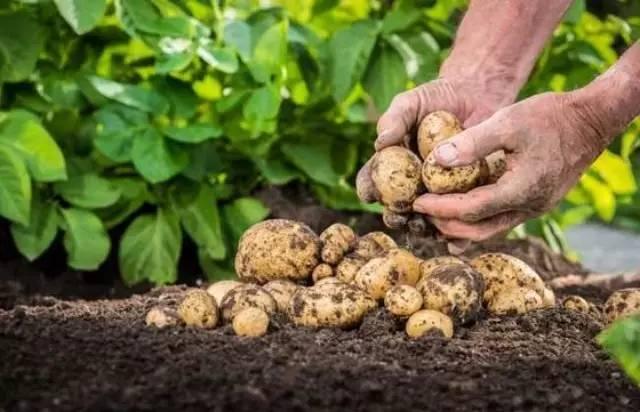 产业探索之农业:互联网农业B2B电商发展现状及典型案例